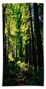 Giant Redwood Forest Beach Towel