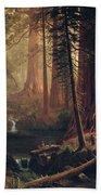 Giant Redwood Trees Of California Beach Towel