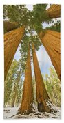 Giant Sequoias And First Snow Beach Towel by Yva Momatiuk John Eastcott