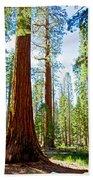 Giant Sequoias In Mariposa Grove In Yosemite National Park-california Beach Towel
