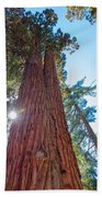 Giant Sequoias Beach Towel