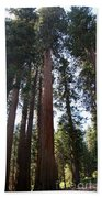 Giant Sequoias - Yosemite Park Beach Towel