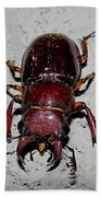 Giant Stag Beetle Beach Towel