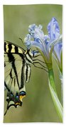 Giant Swallowtail Butterfly Beach Towel