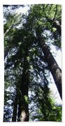 Giants Of The Forest Beach Towel