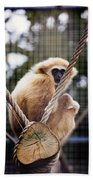 Gibbon On A Swing Beach Towel