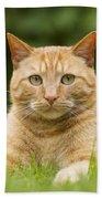 Ginger Cat In Garden Beach Towel