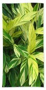 Ginger Lily. Alpinia Zerumbet Beach Towel