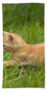 Ginger Tabby Kitten Beach Towel