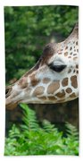 Giraffe-09028 Beach Towel