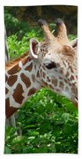 Giraffe-09034 Beach Towel