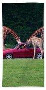 Giraffe. Animal Studies Beach Towel