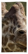 Giraffe Hey Are You Looking At Me Beach Towel