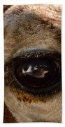 Giraffe Look Into My Eye Beach Towel