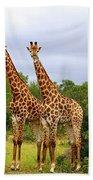 Giraffe Males Before The Storm Beach Towel