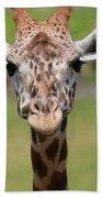 Giraffe Peek A Boo Poster Beach Towel