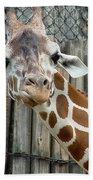 Giraffe-really-09025 Beach Towel