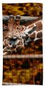 Giraffe Showing His 20 Inch Tongue Beach Towel