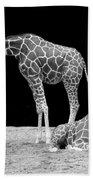 Giraffe's Beach Towel