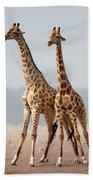 Giraffes Standing Together Beach Sheet