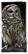 Give A Hoot Beach Towel by John Haldane