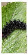 Glanville Fritillary Butterfly Caterpillar - Melitaea Cinxia Beach Sheet