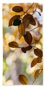 Glorious Foliage. Tree In Pamplemousse Garden 1. Mauritus Beach Towel