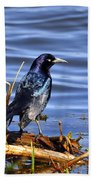 Glorious Grackle Beach Towel
