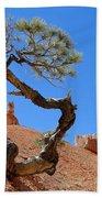 Gnarled Pine In Bryce Canyon Utah Beach Towel