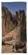 Gnarled Trunk Beach Towel