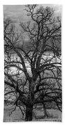 Gnarly Tree Beach Towel