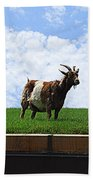 Goat On A Sod Roof In Sister Bay In Wisconsin Beach Towel