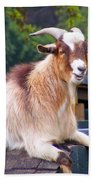 Goat On The Roof Beach Towel