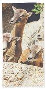 Goats On A Rock Beach Sheet
