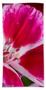Godetia Pink And White Flower Beach Towel