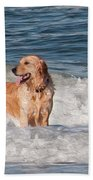 Golden At The Beach Oil Beach Towel