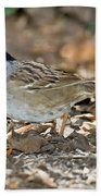 Golden-crowned Sparrow Beach Towel