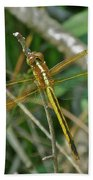 Golden Dragonfly At Rest Beach Towel
