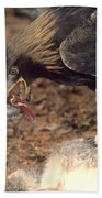 Golden Eagle Eats Beach Towel