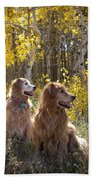Golden Goldens - Golden Retriever Brothers - Casper Mountain - Casper Wyoming Beach Towel