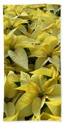 Golden Poinsettias Beach Towel