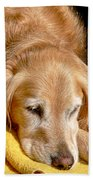 Golden Retriever Dog On The Yellow Blanket Beach Towel