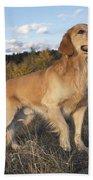 Golden Retriever Dog Beach Towel