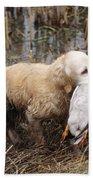 Golden Retriever Dog With Mallard Duck Beach Towel