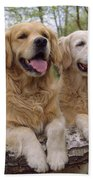 Golden Retriever Dogs Beach Towel