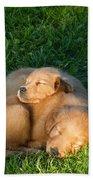 Golden Retriever Puppies Sleeping Beach Towel by Linda Freshwaters Arndt