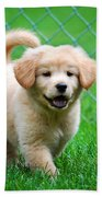 Golden Retriever Puppy Beach Towel