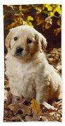Golden Retriever Puppy Dog In Fallen Beach Towel