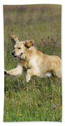 Golden Retriever Running Beach Towel