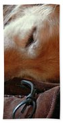 Golden Retriever Sleeping With Dad's Slippers Beach Towel